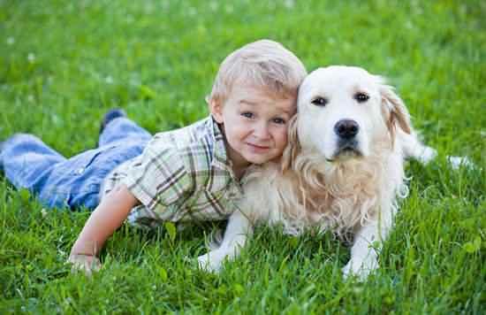 怎么安慰宝宝失去宠物